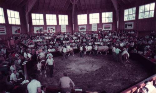 Einst kamen die Landwirte regelmäßig zum wöchentlichen Viehmarkt und zu den Viehversteigerungen nach Oberwart. Im Jahr 2000 war Schluss damit. Seither steht die Rotunde verlassen da. Kurze Zeit nutzte die Team Österreich Tafel des Roten Kreuzes die Räumlichkeiten. Wie es mit dem denkmalgeschützten Gebäude weitergeht, ist ungewiss.