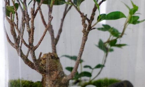 Der eigene Dschungel im Wohnzimmer. Pflanzen bestimmen auch im kommenden Jahr unsere Wohn- und Lebensräume und sorgen für Entspannung.