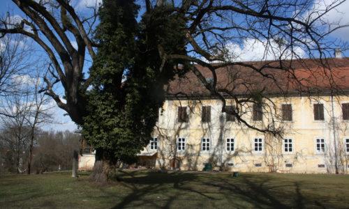 Die alte Platane und die Schwarznuss neben dem Schloss wurden von den Vorfahren gesetzt und sind imposante Bestandteile der Geschichte des Schloss Kohfidisch.