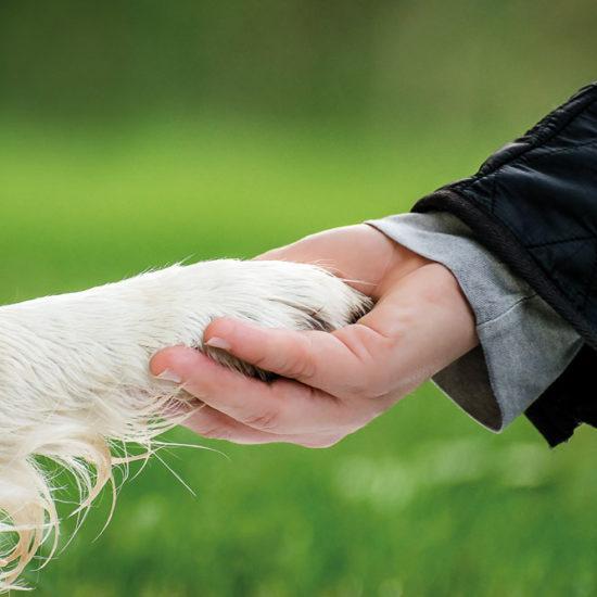 Warum Tierschutzunterricht für die Sicherheit wichtig ist