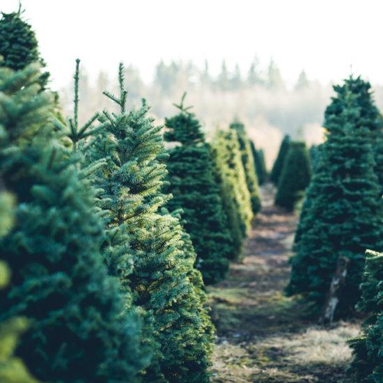 """""""Grüne"""" Weihnacht? Eine ökologische Spurensuche"""